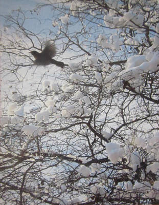 Photograph - I Have A Bird In Spring by Guy Ricketts