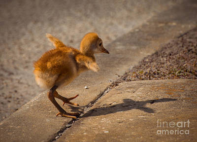 Happiness Photograph - I Have A Wings by Zina Stromberg