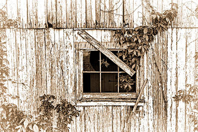 Forgotten Photograph - I Have Survived Many Years by Marcia Colelli