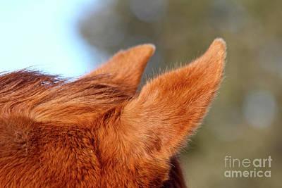 Photograph - I Hear Ya by Ann E Robson