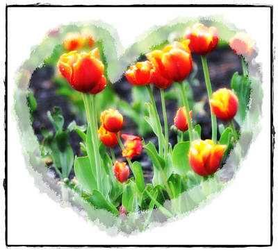 I Heart Tulips Print by Bill Cannon