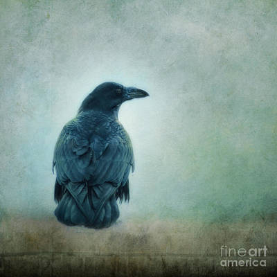 Corvidae Photograph - I Know The Way by Priska Wettstein