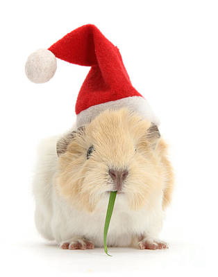 Photograph - I Like To Smoke Grass At Christmas by Warren Photographic