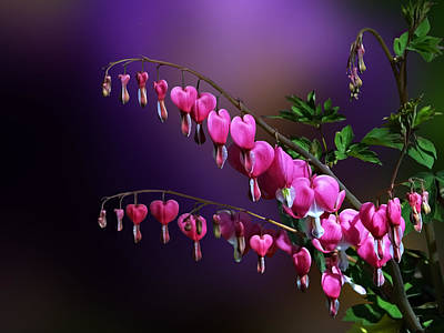 I Love Bleeding Hearts Art Print