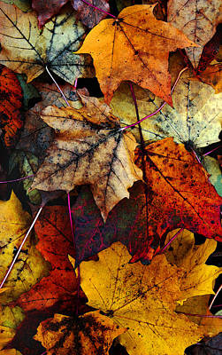 Red Leaf Photograph - I Love Fall 2 by Joanne Coyle