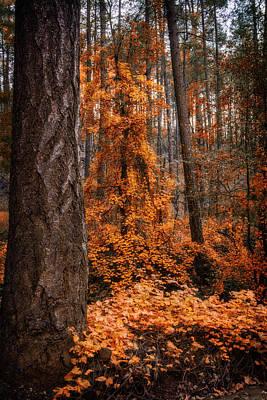 Photograph - I Love Fall  by Saija Lehtonen
