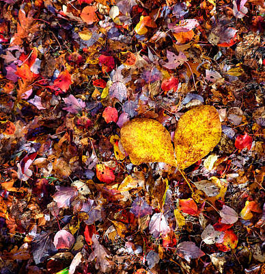 Photograph - I Love Fall by Vicki Jauron