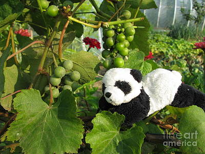Print featuring the photograph I Love Grapes Says The Panda by Ausra Huntington nee Paulauskaite