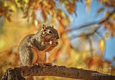 Photograph - I Love Peanuts by Robert Bales