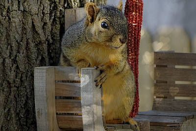 I Love Squirrels Art Print by Theresa Campbell