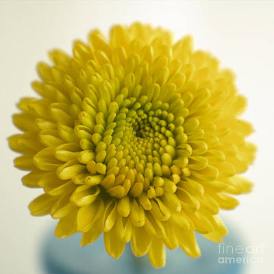 Photograph - I Love The Color Yellow by Ella Kaye Dickey