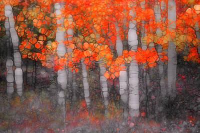 Photograph - I Love You In Orange by Tara Turner