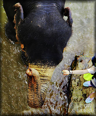 Pets Photograph - I Love Your Touch... by Prar Kulasekara