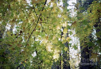 Photograph - I Miss The Color Green by Ana V Ramirez