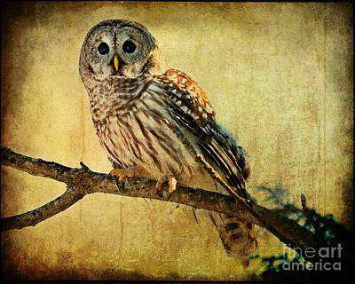 Photograph - Solitude Stands While Wisdom Draws Near by Heather King