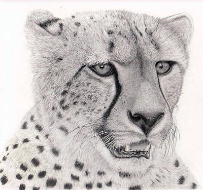 Cheetah Drawing - I Only Have Eyes For You My Dear by Alexandra Riley