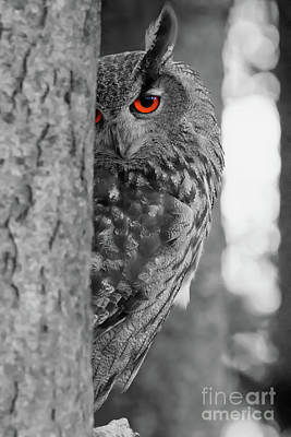 Owl Photograph - I See You by CJ Park