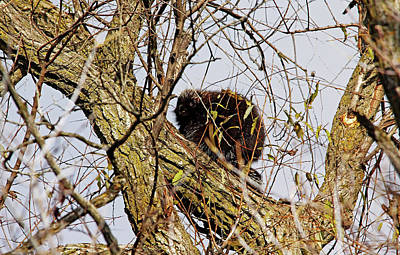 Photograph - I See You by Debbie Oppermann