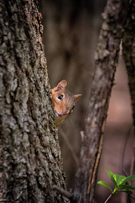 Photograph - I See You by Susan Rissi Tregoning
