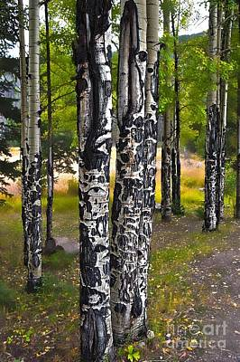 Photograph - I See You - The Aspens by Donna Sizemore