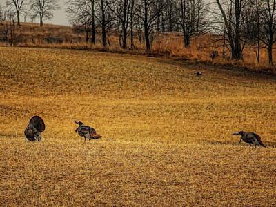Photograph - I Strut You Gobble by Dale Kauzlaric