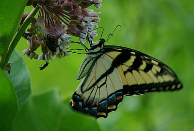 Achieving Royalty Free Images - I want to be a butterfly Royalty-Free Image by Jenny Gandert