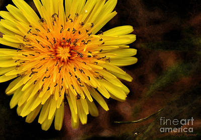 Dandelion Photograph - I Want To Be A Flower...2 by Kaye Menner