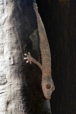 Photograph - I Want To Be Alone Says Gecko by Bonnie Follett