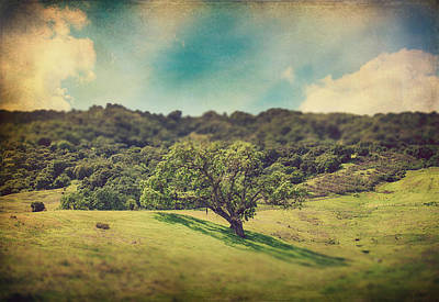 Textured Landscape Photograph - I Will Lay Down My Heart by Laurie Search