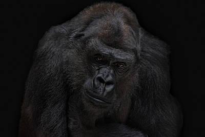 Monkey Photograph - I Will Never Gonna Be A Silverback by Joachim G Pinkawa