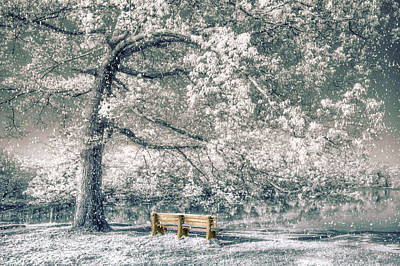 Photograph - I Will Wait For You In Winter by Debra and Dave Vanderlaan