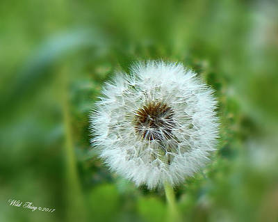Photograph - I Wish . . .  by Wild Thing