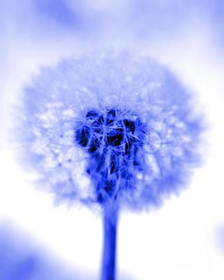 I Wish In Blue Art Print by Valerie Fuqua