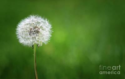Photograph - I Wish by Karen Adams
