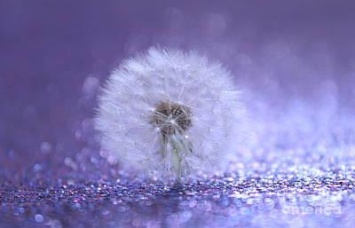 White Flower Photograph - I Wish by Krissy Katsimbras