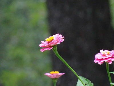 Photograph - I'am Strong, I'am Pink. by Mary Halpin