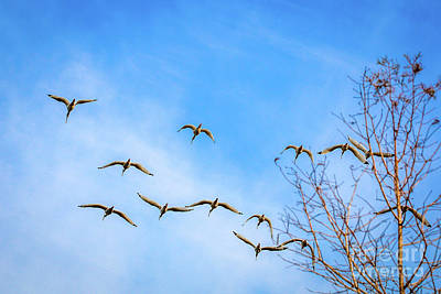 Photograph - Ibis And Blue Sky by Tom Claud