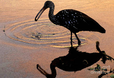 Ibis Digital Art - Ibis At Dusk by David Lee Thompson
