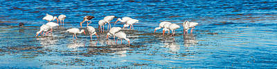 Photograph - Ibis by Ed Gleichman