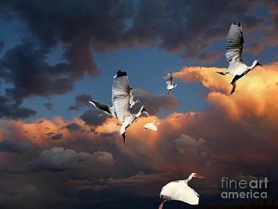 Photograph - Ibis In Flight by Irma BACKELANT GALLERIES