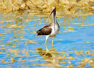 Photograph - Ibis In The Marshland by Judy Kay