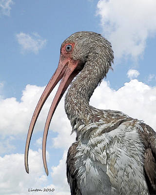 Ibis Digital Art - Ibis by Larry Linton
