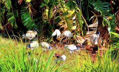 Photograph - Ibis Meet Up Spot by Miroslava Jurcik