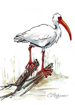 Ibis Drawing - Ibis On A Perch by Carol Allen Anfinsen