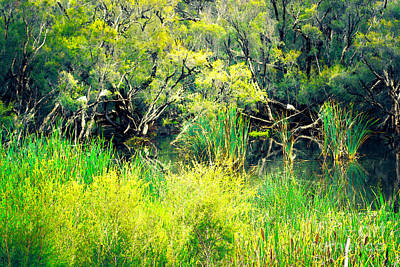 Photograph - Ibis Roosting by Cassandra Buckley