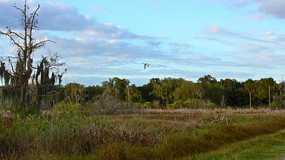 Photograph - Ibis Sundown Flyover by Carol Bradley