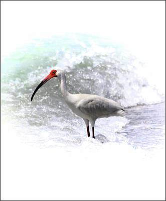 Photograph - Ibis Surf by Sheri McLeroy