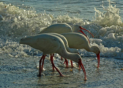 Keith Richards - Ibises by Juergen Roth