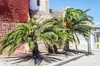 Photograph - Ibiza Palm Trees by Steve Purnell