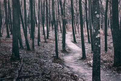 Black And White Horse Photography - Ice Age Trail Near Lapham Peak by Scott Norris